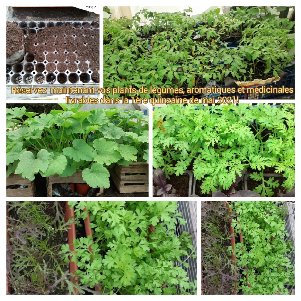 Semis et plants aux Jardins De Tara